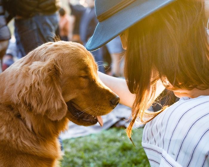 犬,散歩,触る,触り方,断る,咬傷事故,ジャーキーテロ
