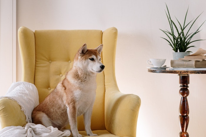 柴犬,犬種,犬図鑑,飼い方,歴史,性格