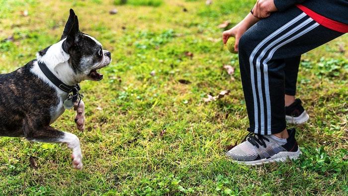 犬,災害,対策,避難,避難所,避難訓練,しつけ,靴,トイレ,自助,共助,公助