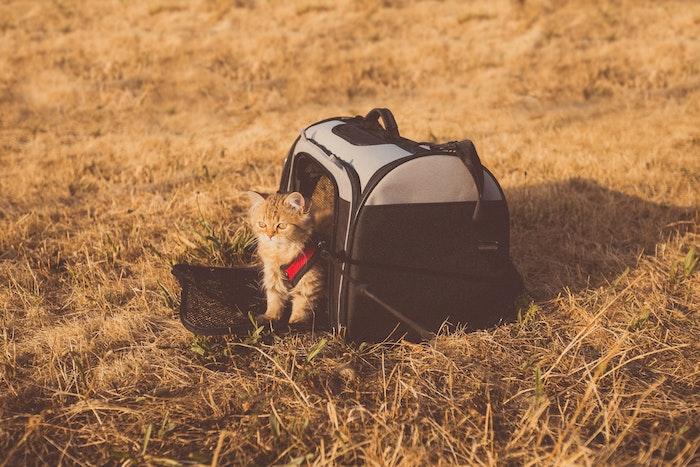 猫,防災,災害,避難,同行避難