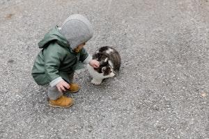 猫,赤ちゃん,衛生,生活
