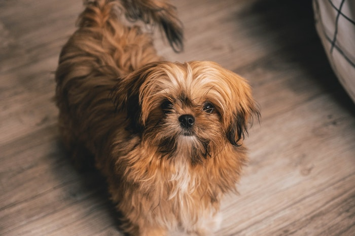 犬,金属アレルギー,症状,首輪,食器